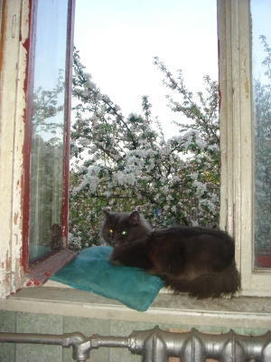 Sid on the sill