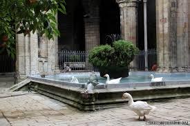 bar geese
