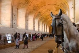 c living horse