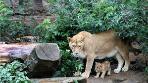 am zoo 2
