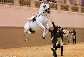 vi spanish horse