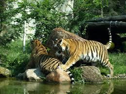 liepzig zoo 2