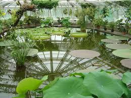 ber botanical