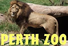 per zoo