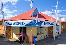 al whale world