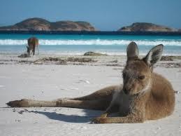 es kangaroo