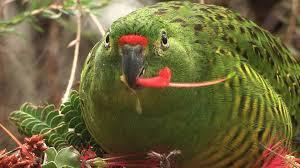 es parrot