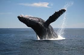 wa whale 2
