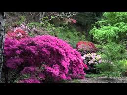 ad botanic 2
