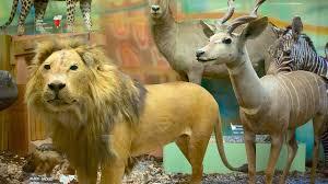 ad lion