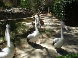 ad zoo 3