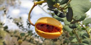 al botanic passion