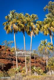 al remote finke palms