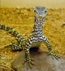 al reptile 2