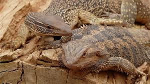 al reptile