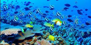 ca reef 2