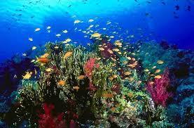 ca reef