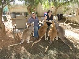 cob kangaroo 2