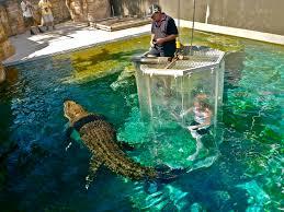 dar croc 2