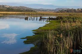 laun wetlands