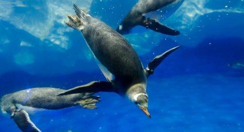 auk sealife