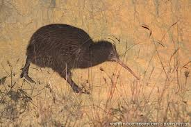 keri forest kiwi