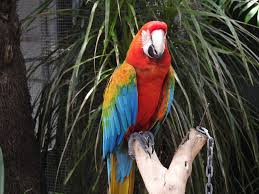 keri parrot 2
