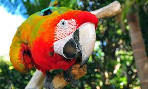 keri parrot