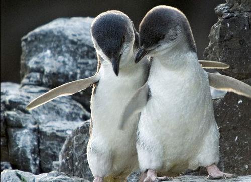 ch antarctic 2