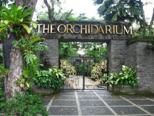 man rizal orchiderium