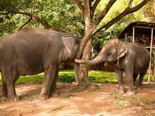 pat elephant 2