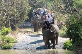 pat elephant