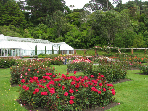 well botanic roses