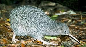 well zea kiwi