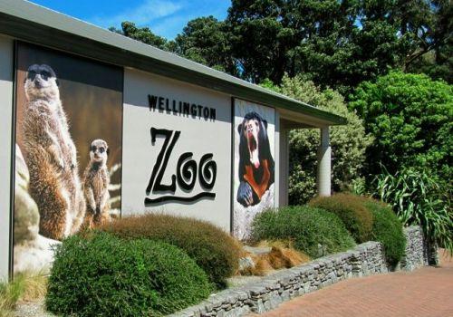 well zoo