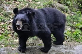 bang safari world bear