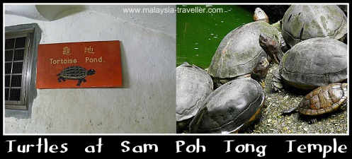ipo SamPohTongTurtles