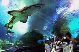 k aquaria