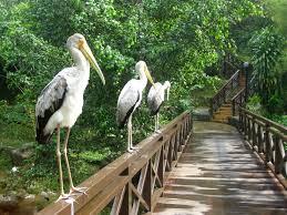 k bird park 2