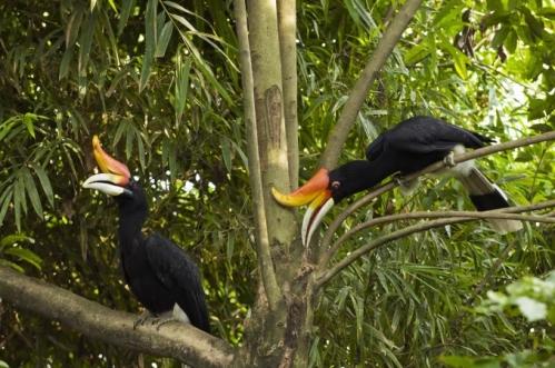k bird park hornbills
