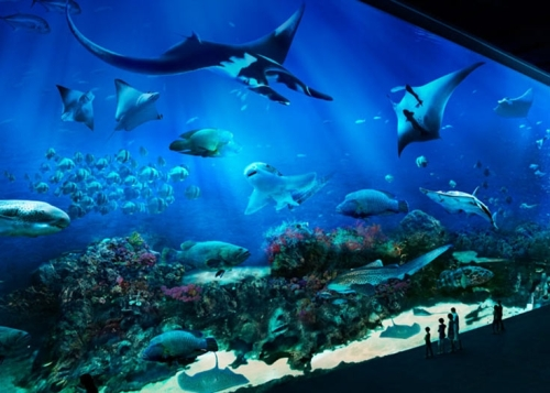 sing aquarium 2