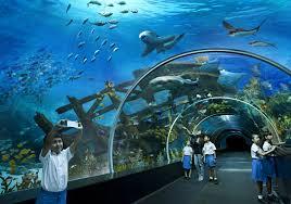 sing aquarium