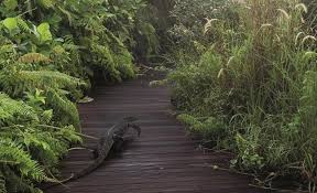 sing wetland reserve 2