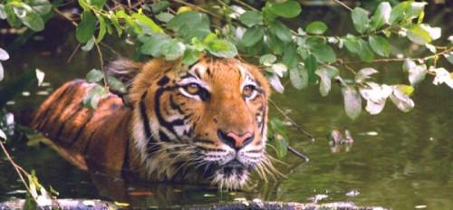 tai zoo 2