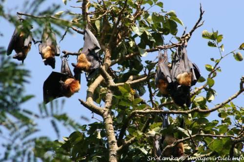kan botanic bats