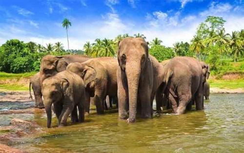 kan elephants