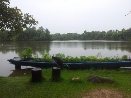yan Hlawgar-Wildlife-Park-Yangon3