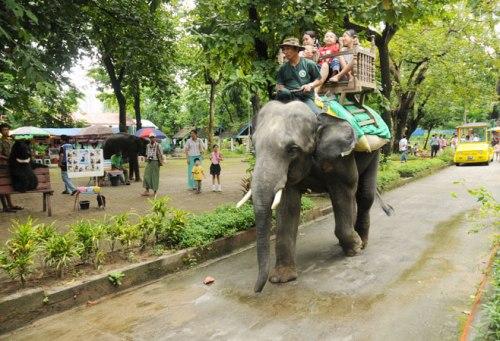 yan zoo