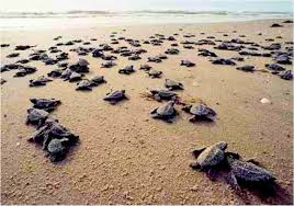 and turtles