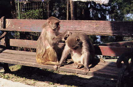 dar observatory monkey